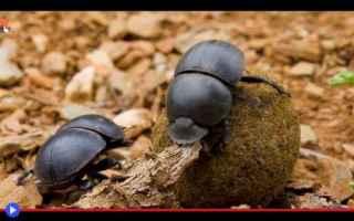 Animali: animali  insetti  africa  scarabei