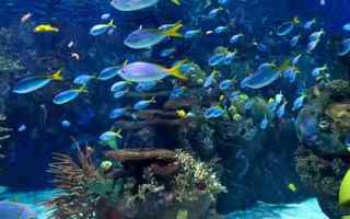 acquario  android  live wallpaper  sfondi