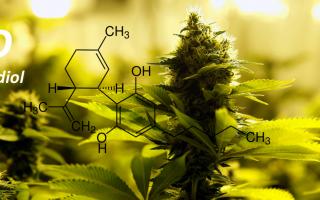 Siti Web: cannabis
