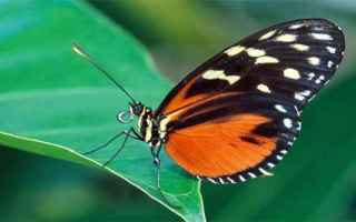 farfalla  fate  psiche  simbolismo