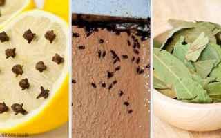 Casa e immobili: insetti  eliminare gli insetti