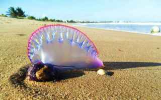 mare  vacanze  meduse