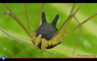 Animali: aracnidi  animali  artropodi  ragni