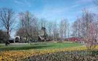 Viaggi: olanda  viaggi  blog  tulipani
