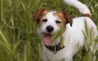 cane  veterinario  forasacchi