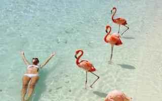 Viaggi: viaggi  spiaggia  mare  fenicotteri