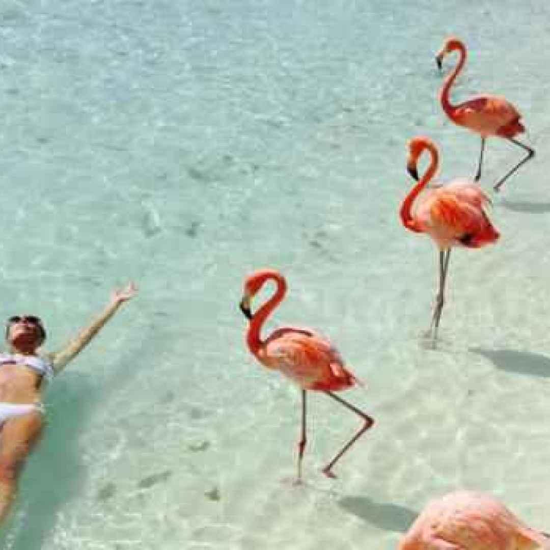 Stop ai fenicotteri gonfiabili! Facciamo il bagno con i veri fenicotteri rosa.