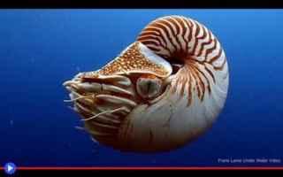 molluschi  cefalopodi  conchiglie