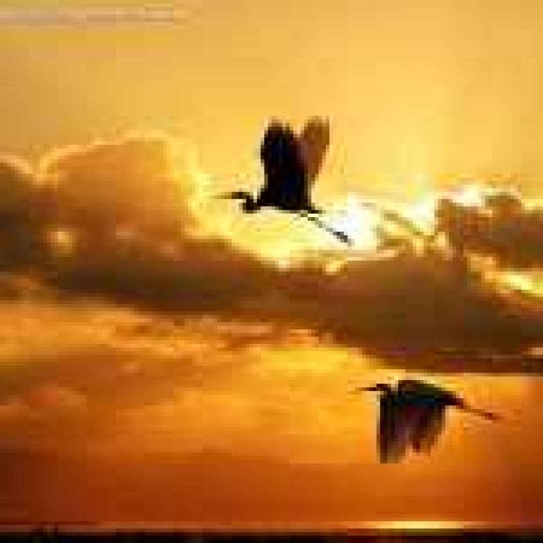 immagini  occhi  uccelli  volatili