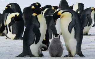 Psiche: interpretazione sogni  sognare pinguino
