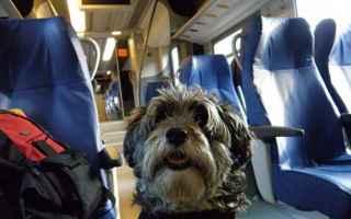 Viaggi: In viaggio con il tuo cane, ecco con quali compagnie aeree