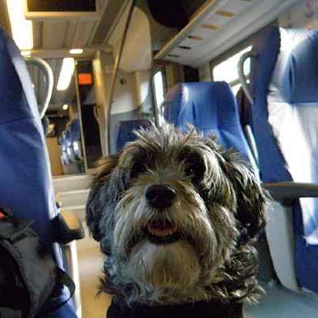 In viaggio con il tuo cane, ecco con quali compagnie aeree