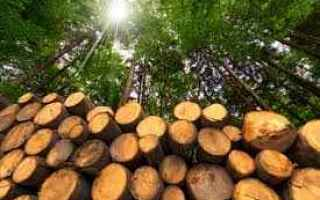 Ambiente: biomasse  ue  direttiva ue  ambiente