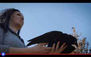 Animali: animali  uccelli  corvi  esperimenti
