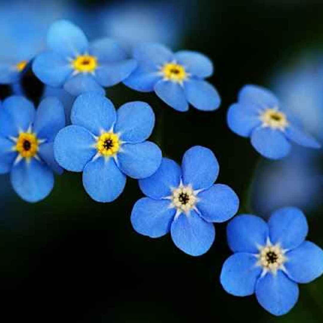 seduzione  fiori  psicologia