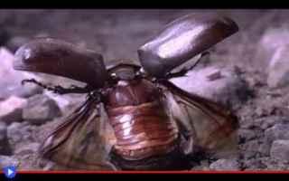 Animali: animali  insetti  volo  creature