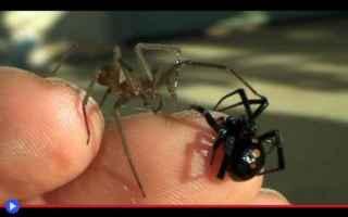 Roma: ragni  animali  aracnidi  veleno