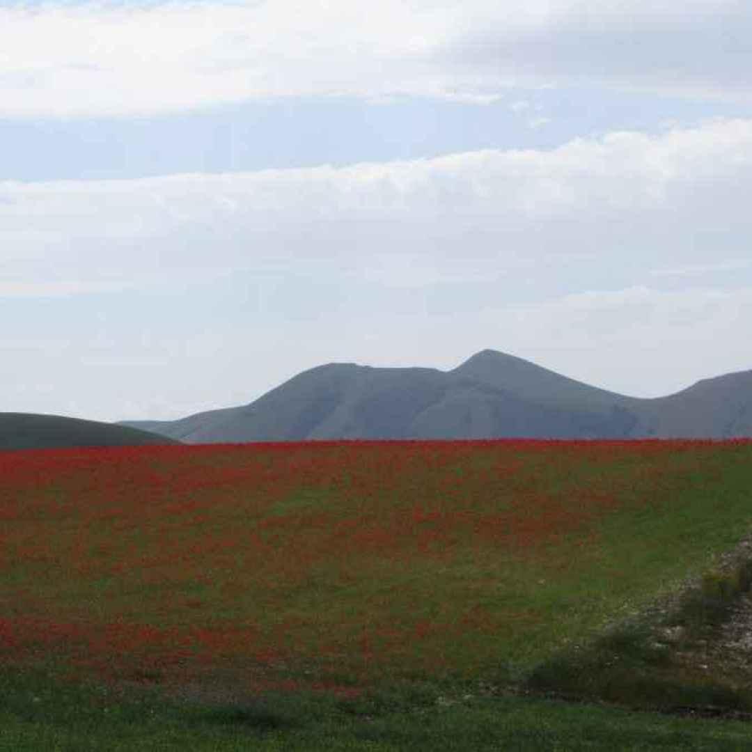 La fioritura e le leggende di Castelluccio di Norcia