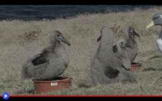 Animali: animali  uccelli  nuova zelanda