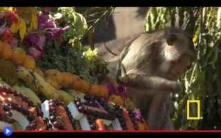 dal Mondo: thailandia  animali  scimmie  religioni
