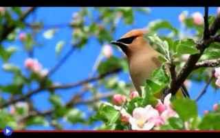 Animali: animali  uccelli  migrazioni  frutta