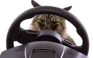 Animali: gatto  vacanze  viaggi  auto