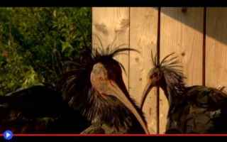 Animali: uccelli  conservazione  ecologia  europa