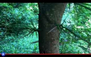 Ambiente: piante  vegetali  alberi  spine  usa
