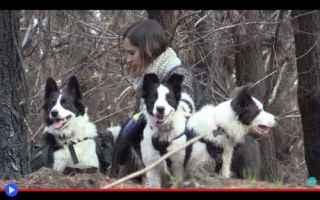Animali: animali  cani  foreste  cile  incendi