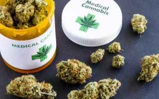 cannabis  releaf  terapeutica
