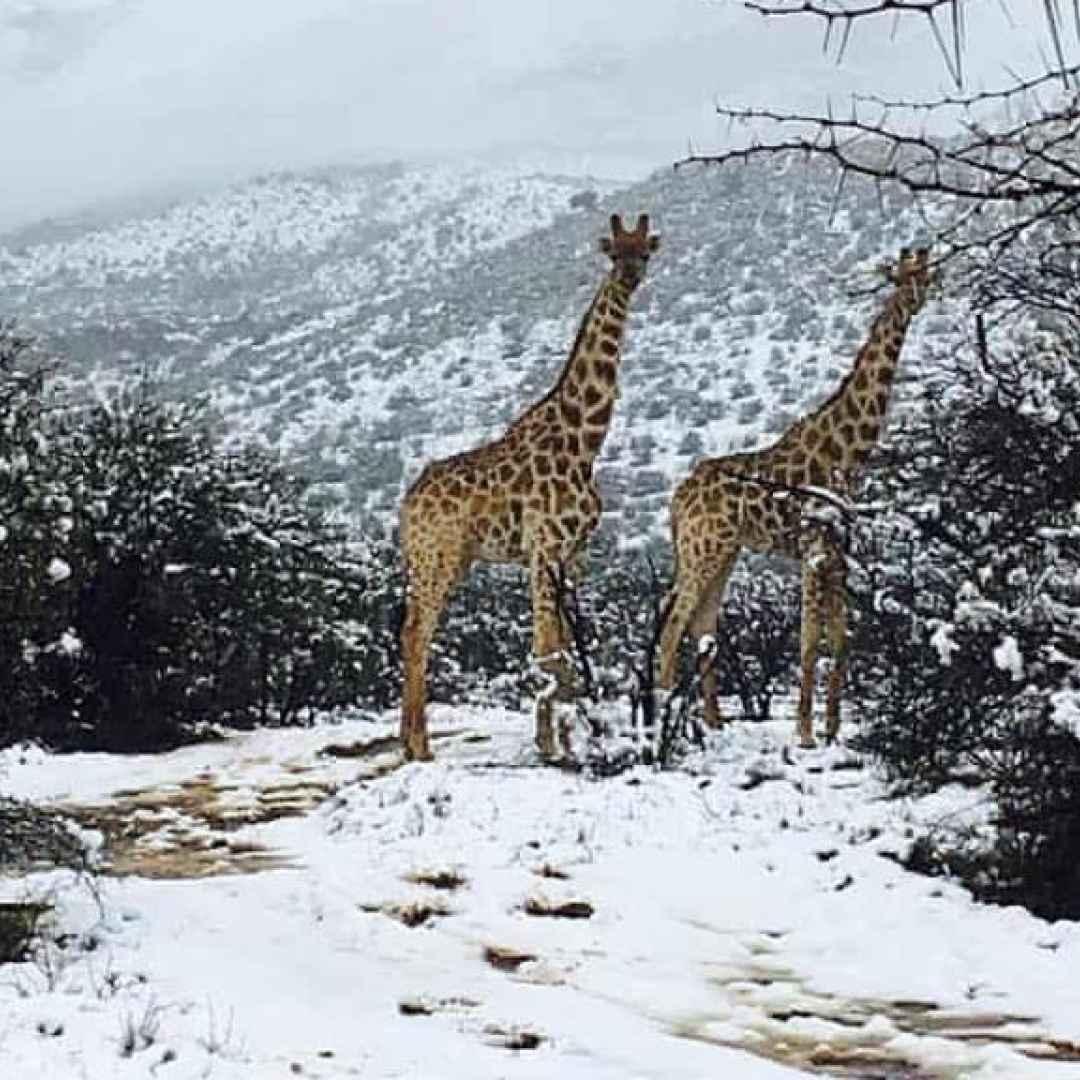 neve africa  clima  meteo