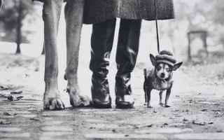 Mostre e Concorsi: cani mostra fotografia erwitt