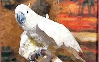 Rosaria Cannavo Calendario.Altre Foto Di Rosaria Cannavo Nuda Il Secondo Calendario