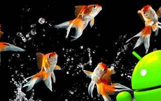 Animali: android  acquario  hobby  pesci  apps