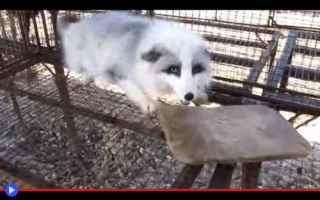 Animali: scienza  volpi  animali  russia  geni