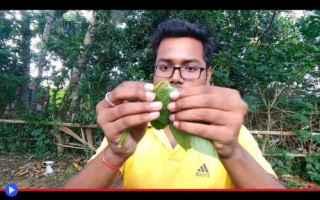 dal Mondo: biodiesel  piante  vegetali  energia