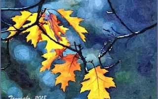 Cultura: albero  autunno  boccia  foglia