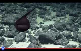 animali  pesci  abissi  oceano  mare
