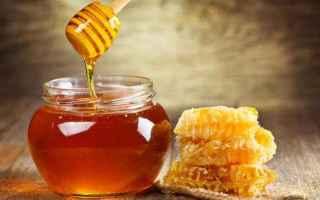 Gastronomia: miele  cucina  food  italia  news  cibo