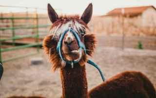 Medicina: alpaca  cancro  cura  ricerca
