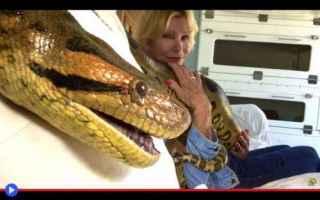 animali  serpenti  animali domestici