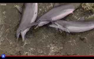 animali  delfini  caccia  predatori