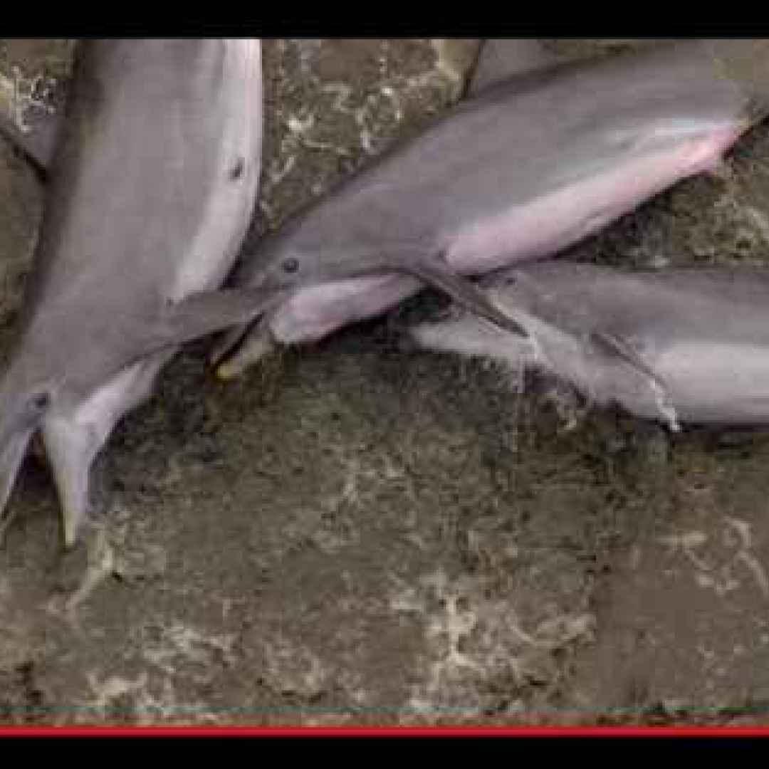 Il coraggio di un vero delfino inizia sempre dove finisce il mare