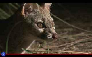 Animali: animali  mammiferi  carnivori  gatti