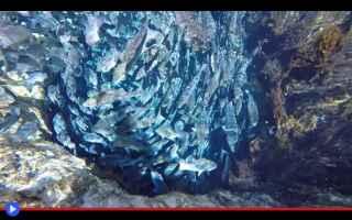 Ambiente: pesci  luoghi  stati uniti  florida