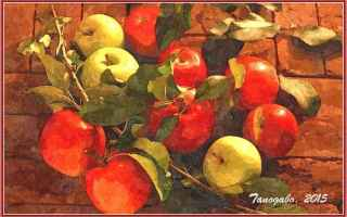 afrodite  arance  frutta  mele  miti