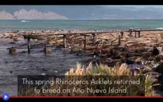 Ambiente: isole  natura  ambiente  stati uniti