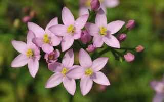 Salute: fiori di bach  floriterapia  salute