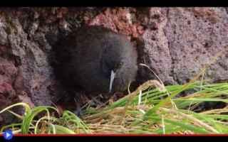 animali  uccelli  biologia  evoluzione