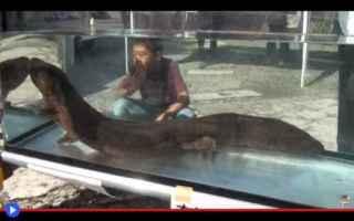 animali  giappone  mostri  salamandre